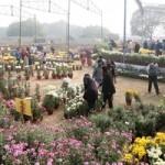 chrysanthemum show 7.resized