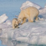 Polar_bear_(Ursus)_maritimus_female_with_its_cub,_Svalbard_(2).resized