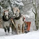 sleigh-horses